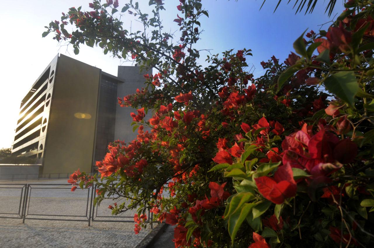 Árvore florida com prédio ao fundo