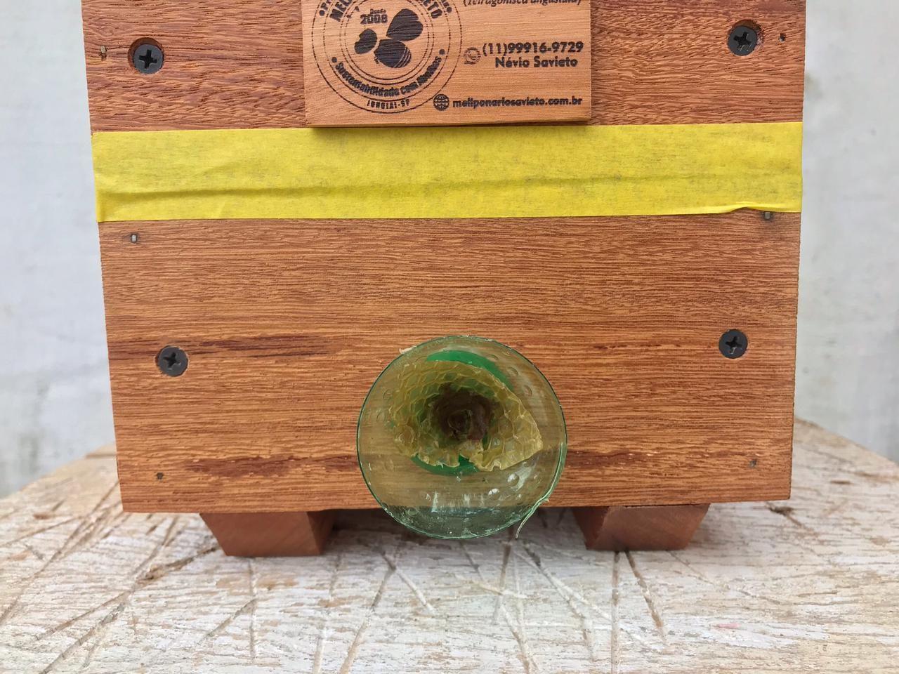 caixa de abelhas de madeiras