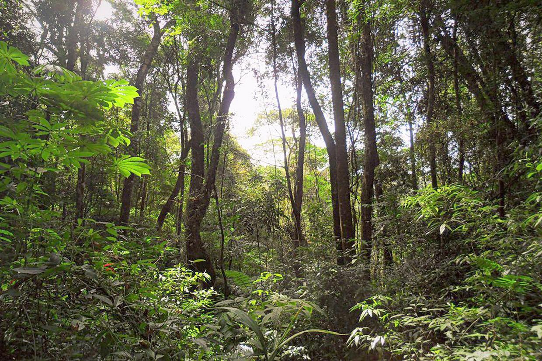 Conservação da Serra do Japi é alvo de trabalho do conselho